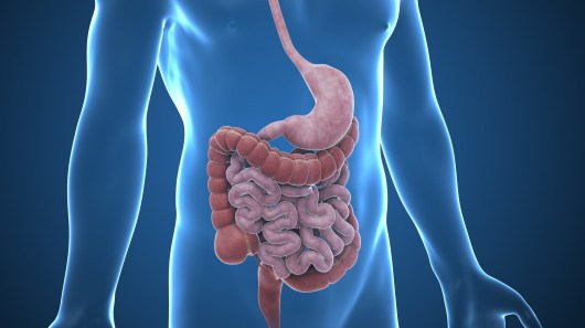 the human gi track Human normal flora the relationships between the human host and most normal flora usually fall under the the category of mutualist relationships e coli, a normal inhabitant of the gastrointestinal tract, is the most common cause of urinary tract infections.