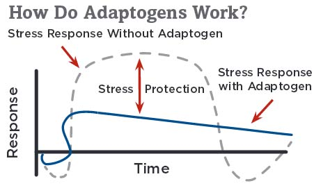 adaptogens-work