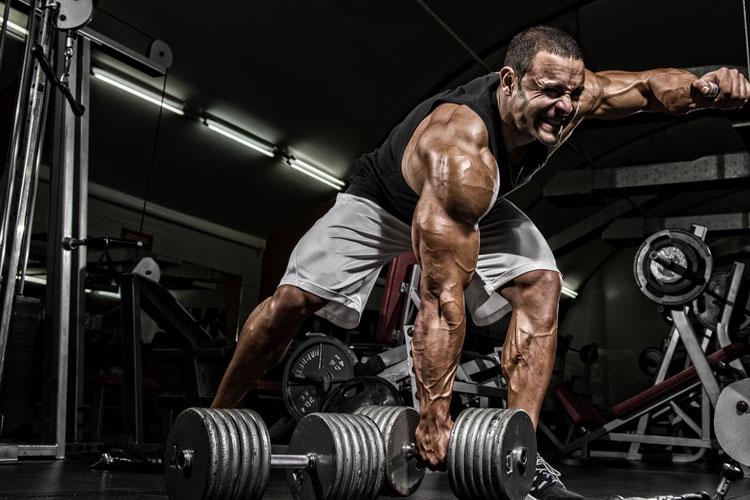 Treino intenso, estresse, recuperação e whey protein. Uma abordagem conceitual
