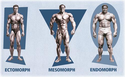 Ectomorfo, Mesomorfo e Endomorfo